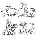 Gyvūnams